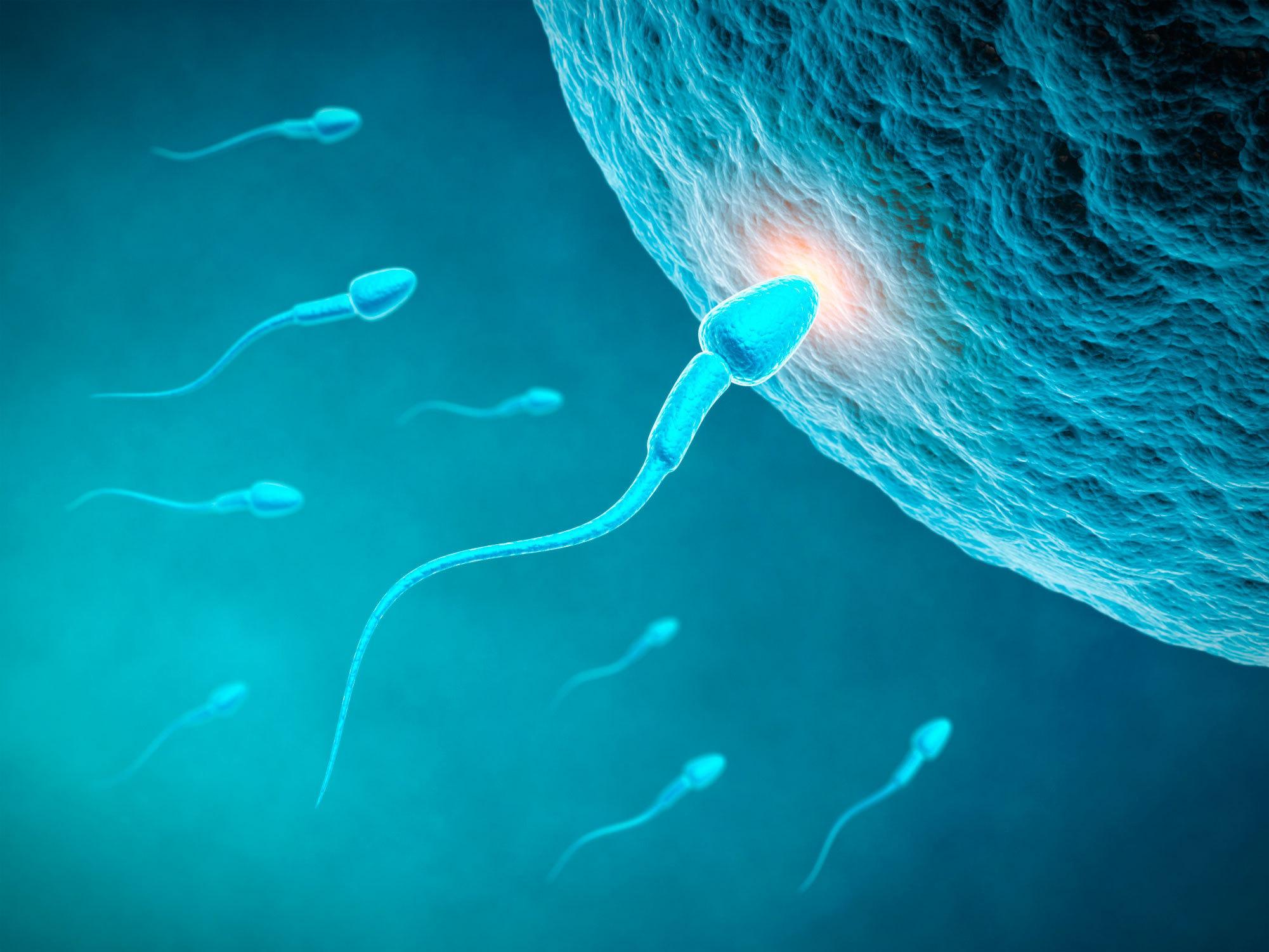 Problème de fertilité